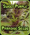 Sweet Seeds Purple Paradise