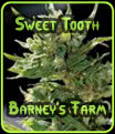 Sweet Tooth Barneys Farm