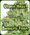 Utopía Haze Barneys Farm