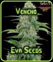 Semillas Veneno Eva