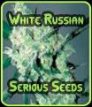 Serious Seeds blancos rusos
