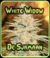 Las semillas White Widow De Sjamaan