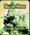 Silver Haze - Sensi Seeds