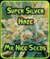Super Silver Haze - Greenhouse Seeds