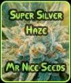 Super Silver Haze - Semillas de efecto invernadero