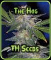 El Hog - TH Seeds
