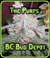 Los Purps - BC Bud Depot