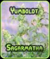 Yumboldt - Sagarmatha Seeds