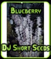 Blueberry - Semillas de DJ Short