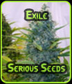 Exile - Serious Seeds
