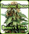 Sueño de mandarina - semillas de granja de Barney