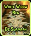 White Widow Reg - De Sjamaan Semillas