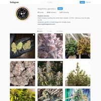 Mephisto Genetics Instagram