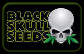 Graines BlackSkull