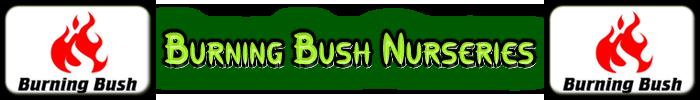 Burning Bush Viveros