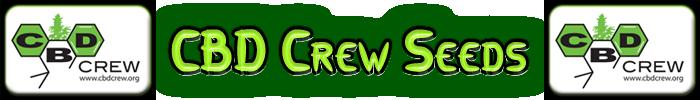 CBD Crew Cannabis frön