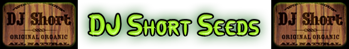 Las semillas de cannabis DJ Short