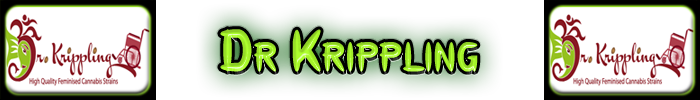Dr Krippling Cannabis frön