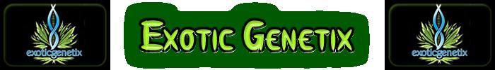 exótico Genetix