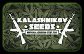 カラシニコフ種子