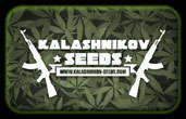 Kalashnikov Frø