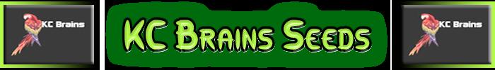 KC Brains Cannabis Seeds KC