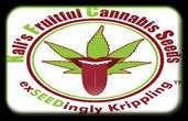 Kalis Fruitful Cannabis Hạt giống Hạt giống