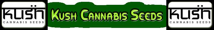 Kush Cannabis frön