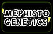 мефистофелските-генетика