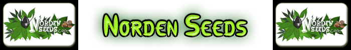 Las semillas de cannabis Norden