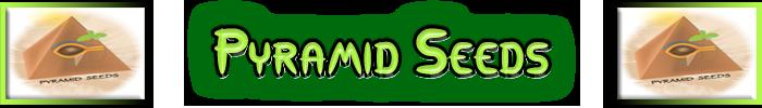 Pyramid Cannabis frön