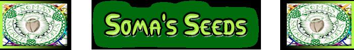 Soma Cannabis frön