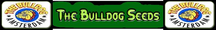 bulldog Frön