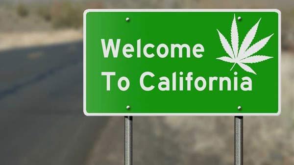 加州大麻种子银行