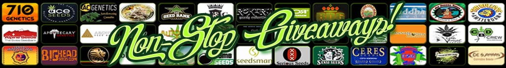 Non-stop Cannabis Seed Giveaways!